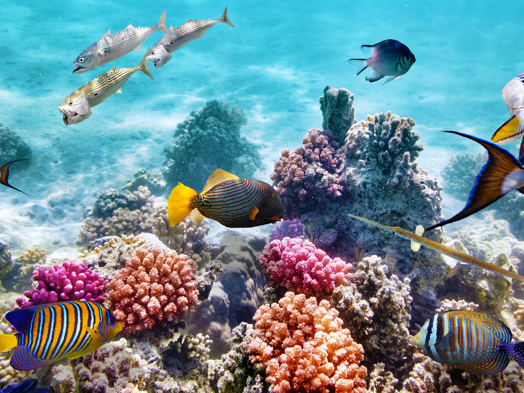 Scuba diving in underwater world with corals and tropical fish.